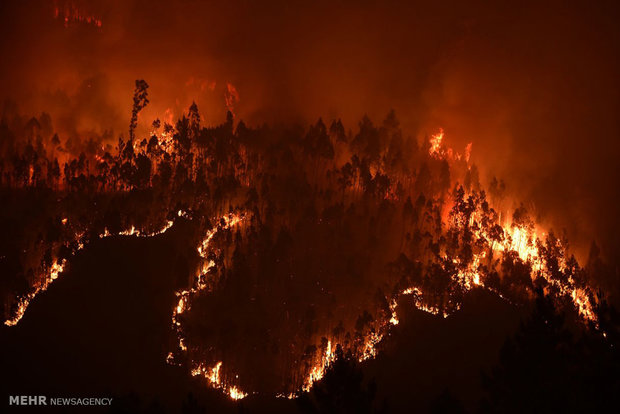Fire in Portuguese forest